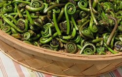 Last call for Fiddleheads: Now we eat them, soon we won't