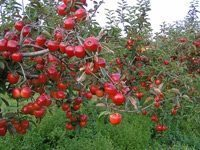 The not-so-secret garden: Toronto is poised to get its first community orchard
