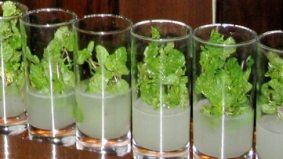 Toronto's most authentic mojitos