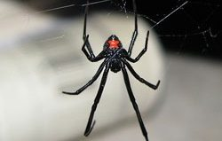 Black widow spider shipped with grapes, salmonella outbreak in Toronto, Michael Pollan's 20 rules to eat by