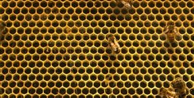 Legalized bees, finger limes come to North America, goodbye to Toronto's floating restaurant