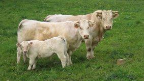 Raw milk advocate Michael Schmidt found not guilty