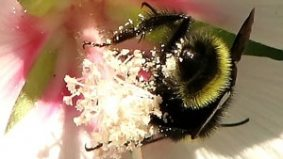 Latest buzz: bee pollen is the new super-disturbing superfood