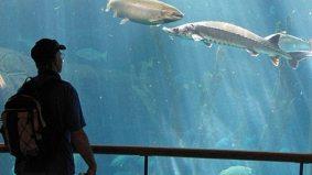 Times Square gets aquarium from Torontonian; CN Tower might get aquarium from Orlandoan
