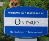 """""""Cougars prowl in Ontario"""""""