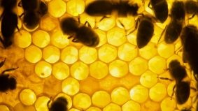 Cellphones may be killing bees, disrupting food supply