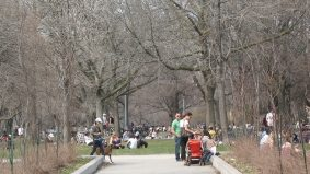 Signs of Spring #4 and #5: the creative class and white squirrels recolonize Trinity Bellwoods Park