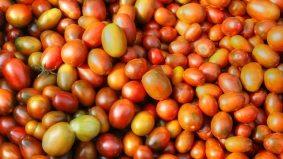 Yesterday's food recall triple threat: grape tomatoes, smoked salmon and soymilk