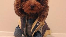 Meet Logan, the most adorable fashion pup from Toronto (add to Google Reader now)