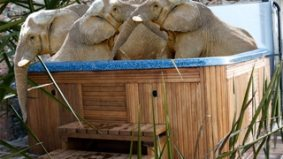 Toronto Zoo's elephants could be guzzling Gatorade on their way to a hot tub party in Cali