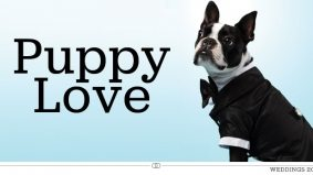 Weddings 2012: a doggie tux so your cute and cuddly canine pal can walk down the aisle too