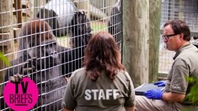 Undercover Boss Canada, episode 1: hanging with gorillas (and worse, employees) at the Toronto Zoo