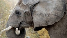 Bob Barker and Giorgio Mammoliti face off in the Toronto Zoo elephant saga