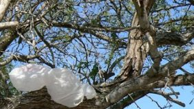Michelle Berardinetti says the (sizable) bag tax proceeds should go to trees—not retailers