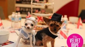 43 cuddly and cute pups from this weekend's Doggy High Tea at the King Edward Hotel
