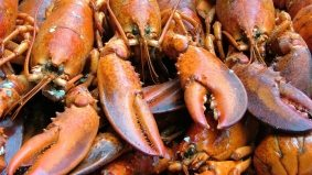 Lobster oversupply brings the Cadillac of shellfish to the masses