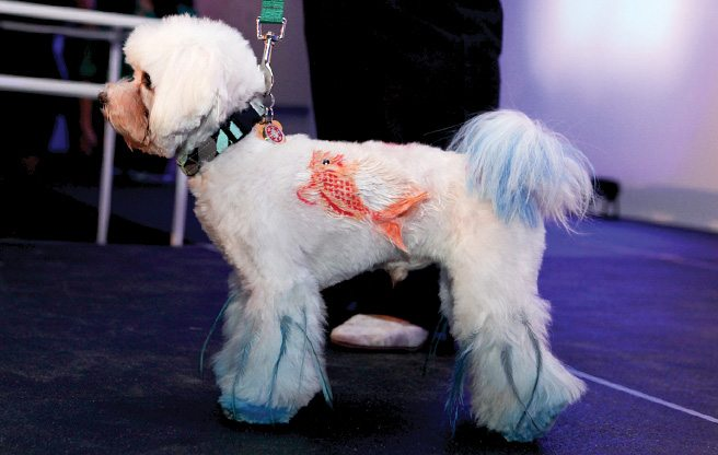 Cute dogs with mohawks, extensions and (temporary) tattoos at the third annual Paws for the Cause gala