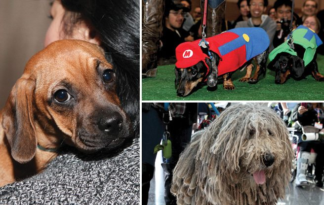 GALLERY: 23 heart-meltingly cute dogs at Winter Woofstock