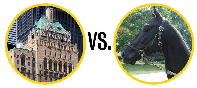 UPDATED: The Royal York does not admit horses, not even semi-famous ones