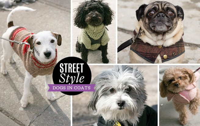 Street Style: cute coats on even cuter dogs