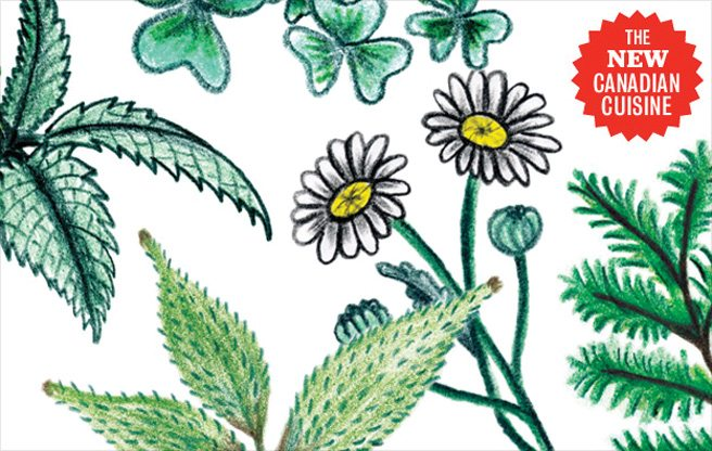 Field Guide: a handy glossary for identifying the foraged weeds and seeds on Toronto menus