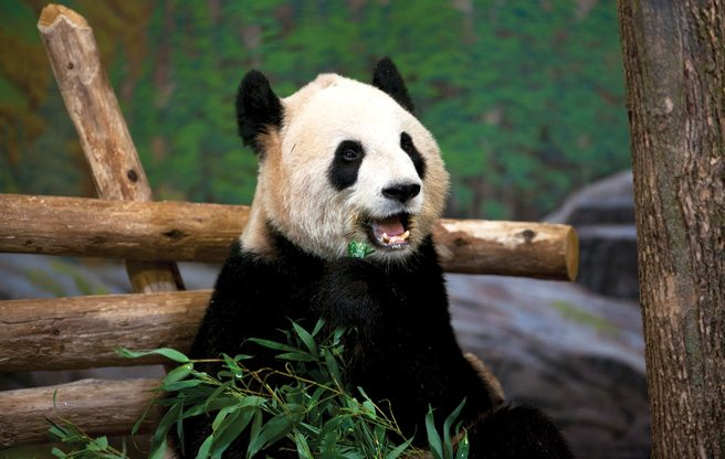 A tour of some of the Toronto Zoo's cutest, cuddliest animals, including the prize pair of giant pandas