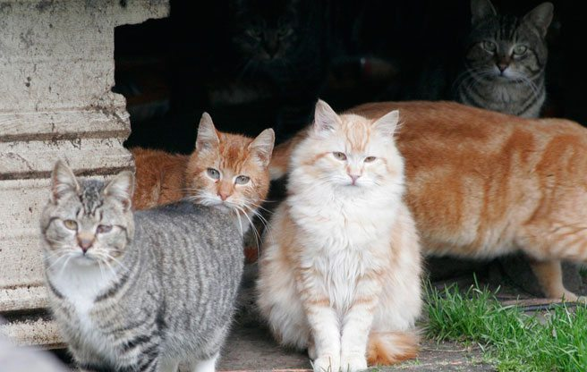 Quoted: a Beach resident on the frustrations of living next to a cat hoarder