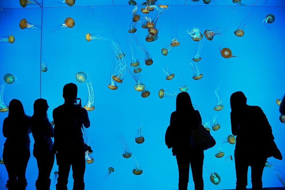 Slideshow: tour the new Ripley's Aquarium with 18 exclusive photos