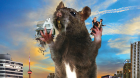 RAT APOCALYPSE! Toronto's new home invaders are growing in shocking numbers