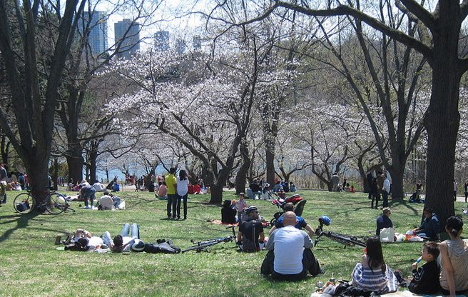 Go see High Park's cherry blossoms while you still can
