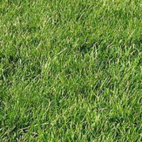 A Scarborough city councillor declares war on grass