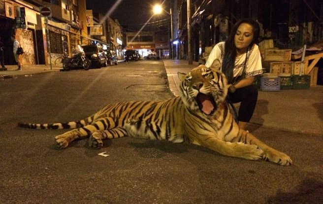 Here is a picture of a tiger in Kensington Market