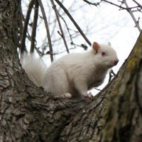 One of Trinity Bellwoods's white squirrels has been found dead