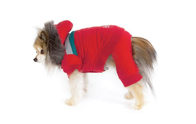 Secrets to a Happy Toronto Winter: #10. Winter wear for dogs is undeniably cool