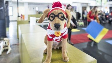 Twenty-two dogs dress up for Halloween
