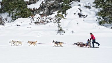Where to trade in your snow tires for a team of huskies