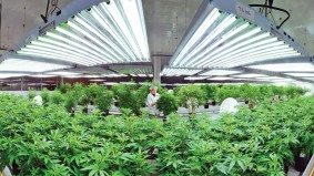 An investor's guide to Canada's publicly traded pot companies