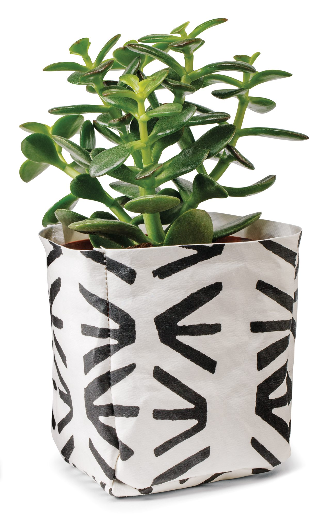Washable paper container_planter $25 by Alexia Bilyk