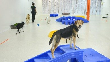 Inside Park9, Toronto's stylish indoor resort for pets