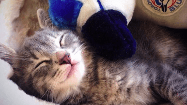 The 15 cutest Toronto cats on Instagram