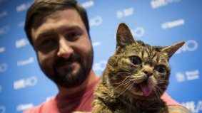 Why people paid $100 to meet Lil Bub, the famous internet cat