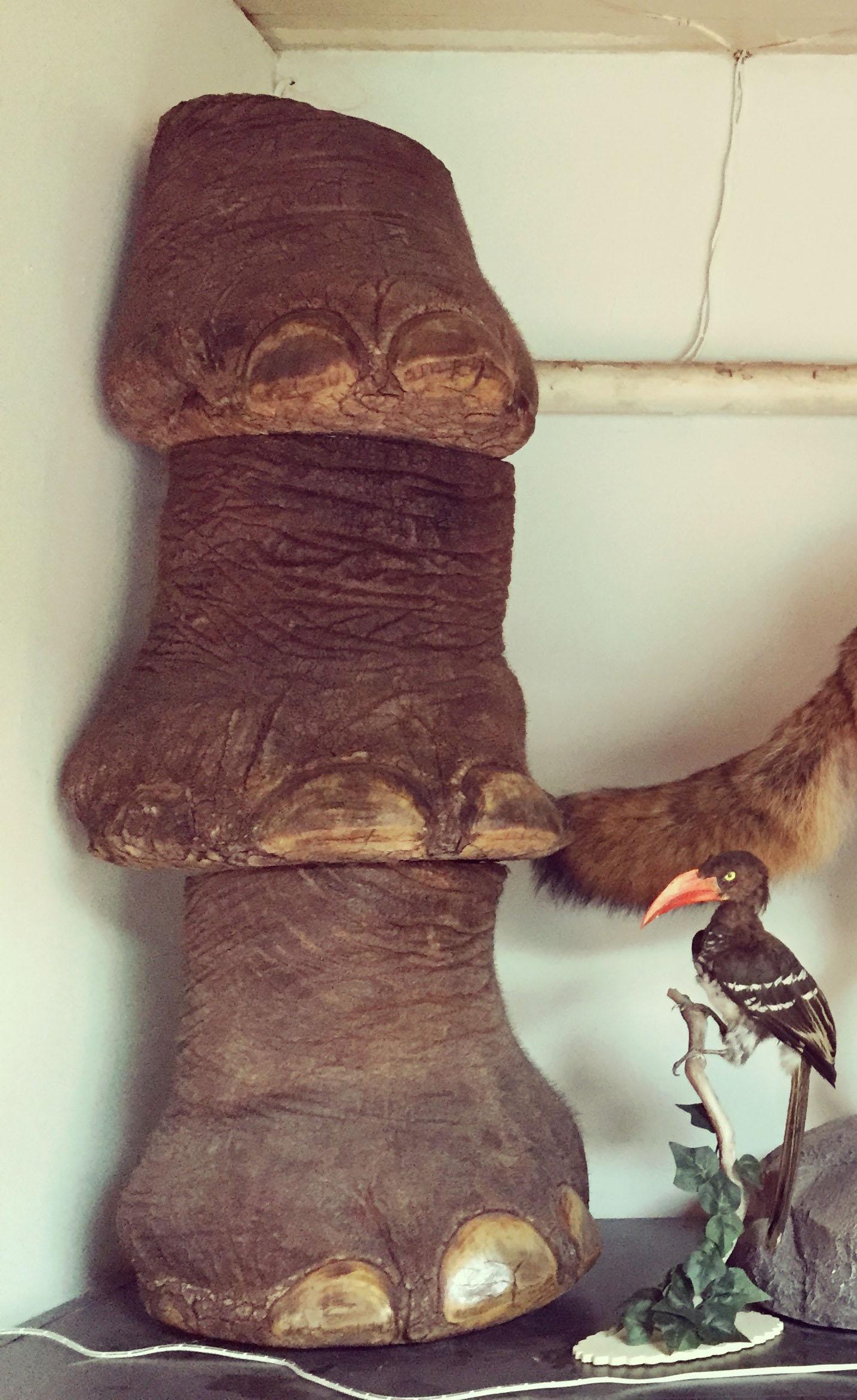 ELEPHANT FEET2