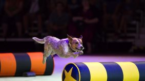 SuperDogs, Elvis Stojko's icy extravaganza and six other must-see shows at the CNE