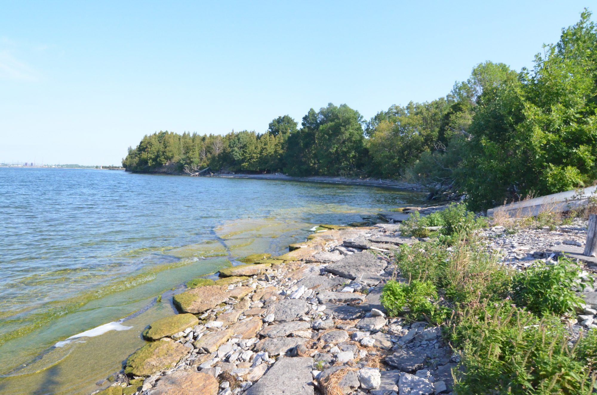amherst-island-cottage-for-sale-9350-second-concession-road-8