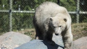 Here are some pictures of all the Toronto Zoo's baby animals