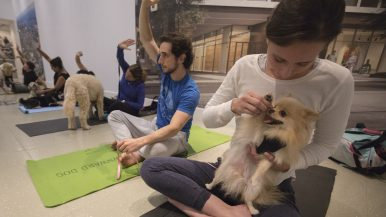 """The dogs found their Zen:"" We asked 10 people what it's like to do yoga with a dog"