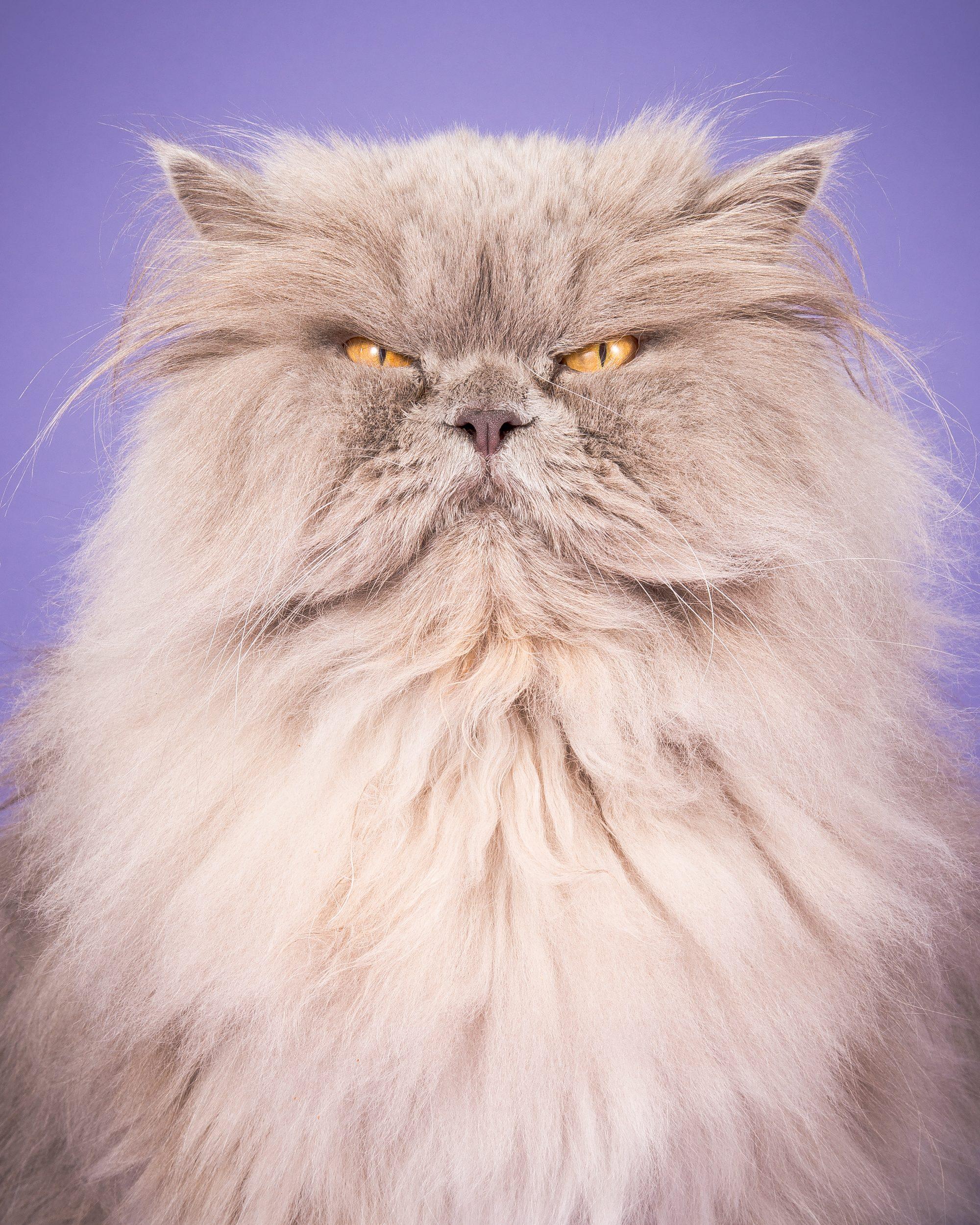 Fat-Cats-Bubba