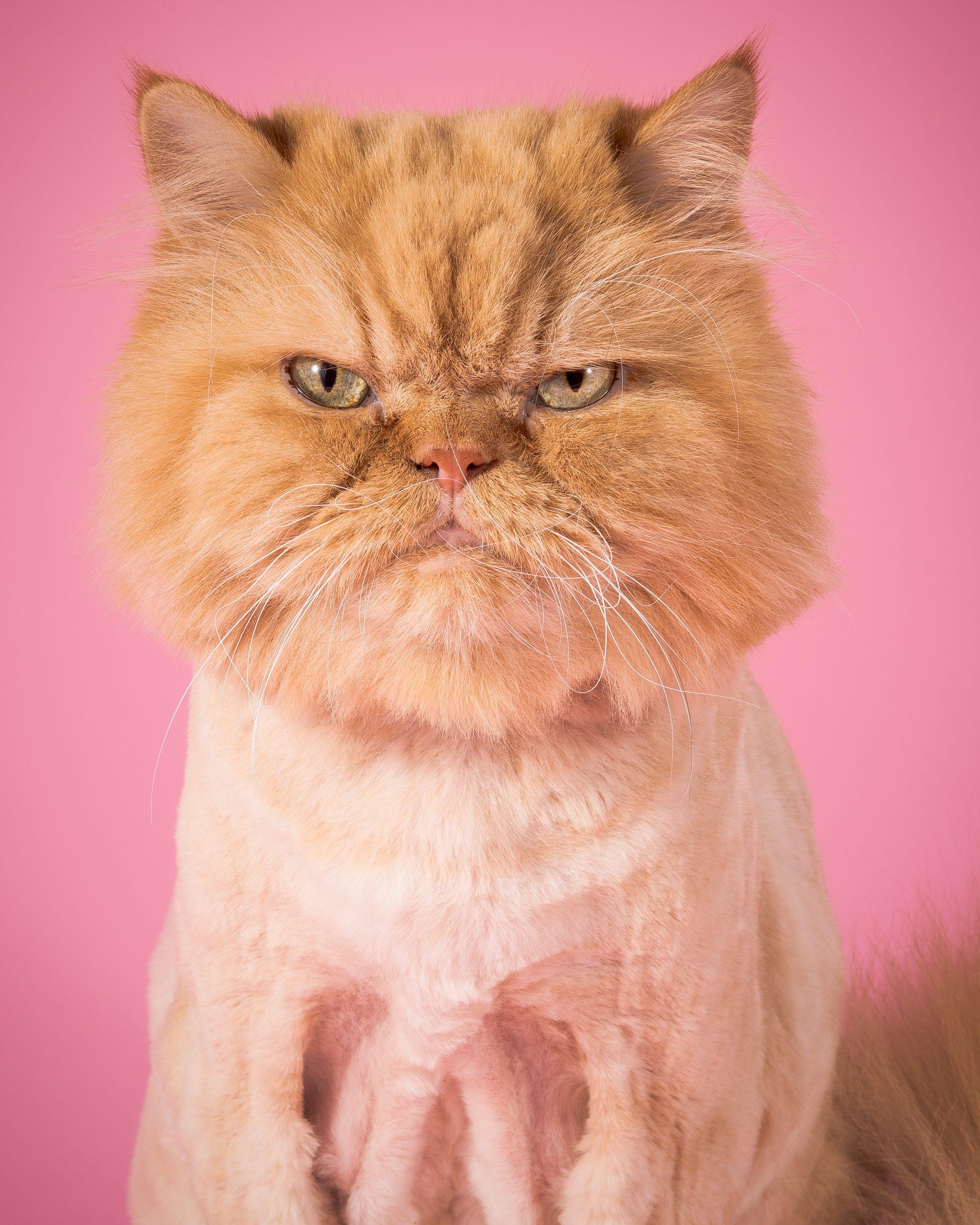 Fat-Cats-Monty2