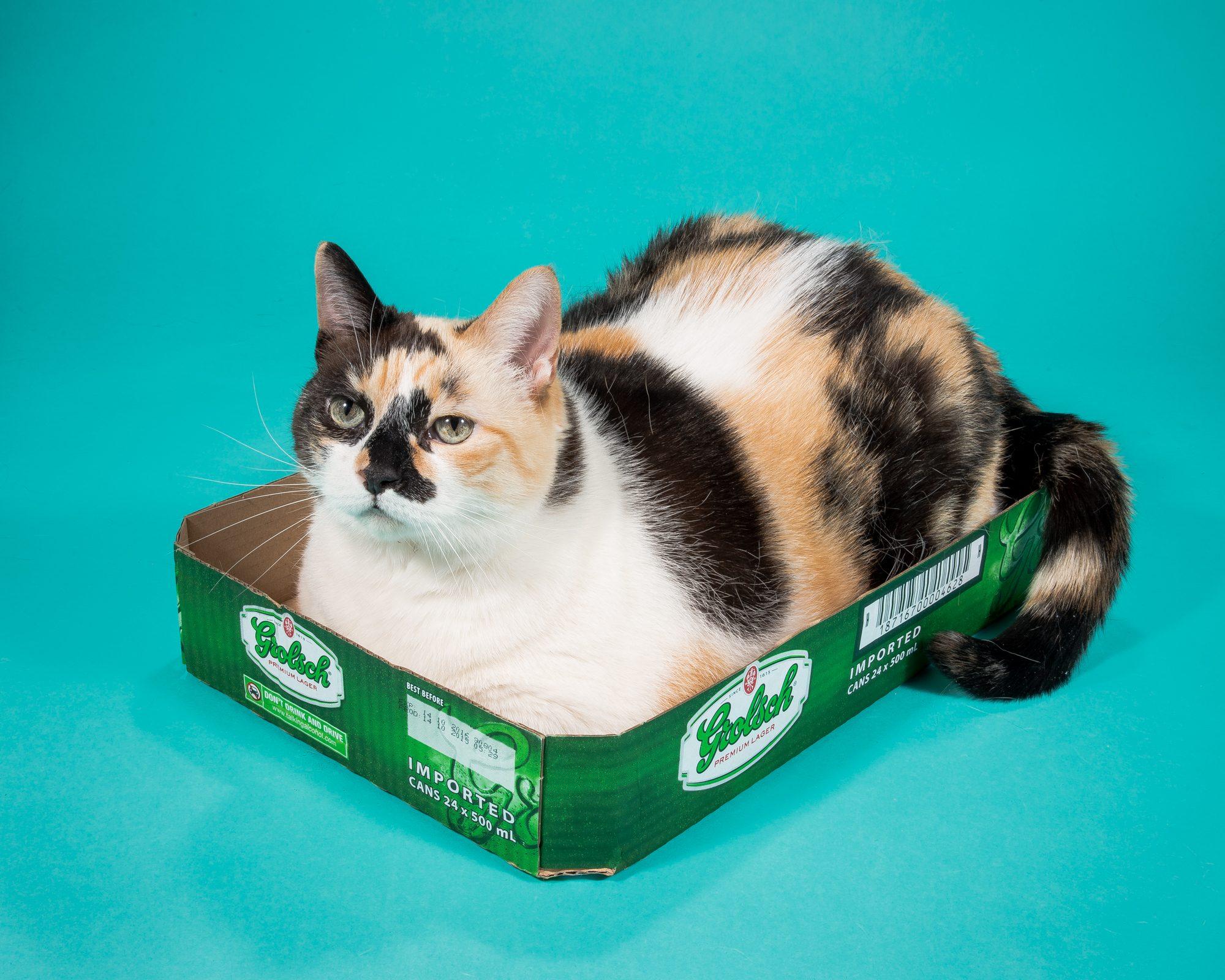 Fat-Cats-Rusty2