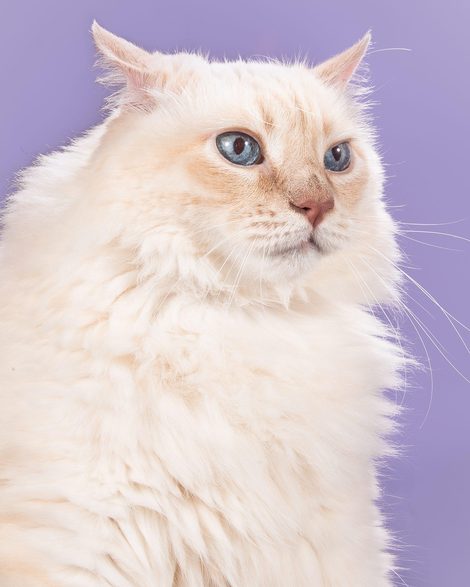 Fat-Cats-Sam